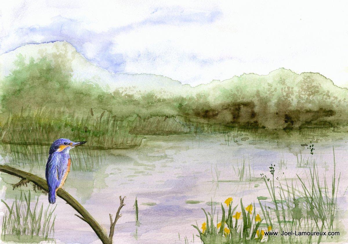 Martin pêcheur au bord d'un étang