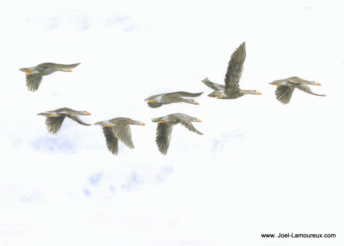 Vol migratoire de canards